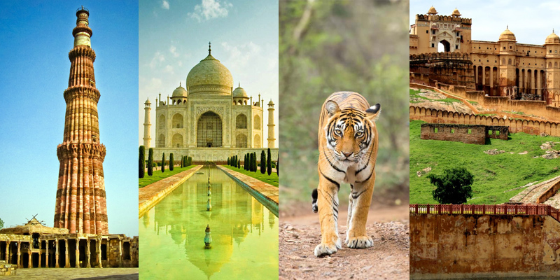 Golden Triangle with Wildlife