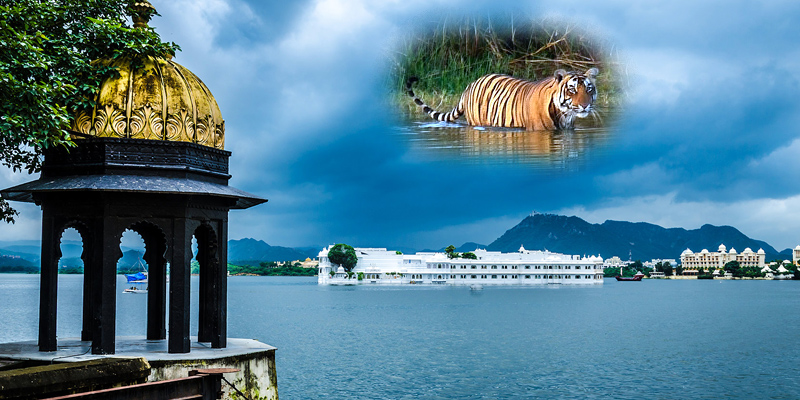 Tiger Tour with Udaipur
